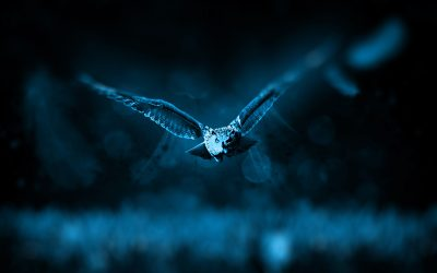 Morning Larks or Night Owls?